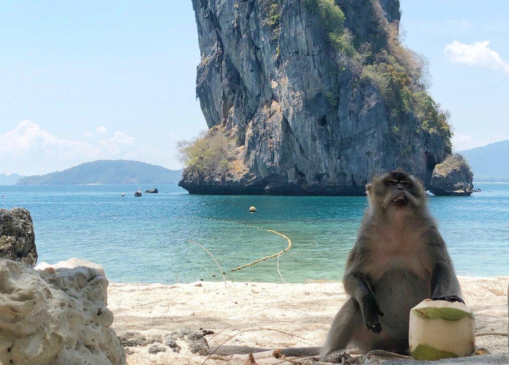ココナッツを食べるお猿